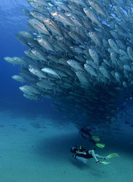 Торнадо из рыб (6 фото)