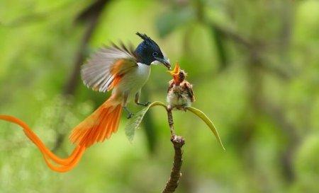 Птицы, прилетевшие из рая (8 фото)