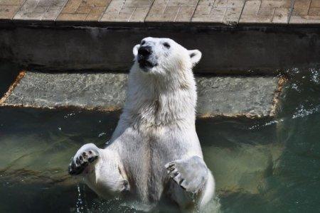 Впервые с 1972 года в Новосибирском зоопарке родился белый медведь (12 фото)