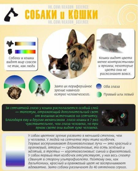 Мир глазами животных (8 фото)
