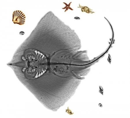 Рентгенографии животных (18 шт)
