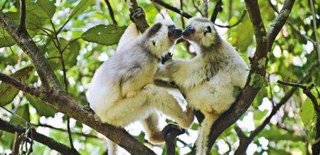 12 Поразительных видов животных, находящихся под угрозой исчезновения (11 фото + видео)