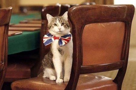 Самые знаменитые служебные кошки (12 фото)