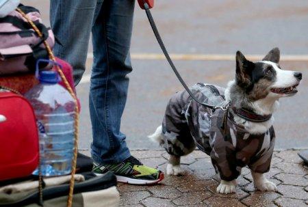 Выставка собак в Бирмингеме (29 фото)