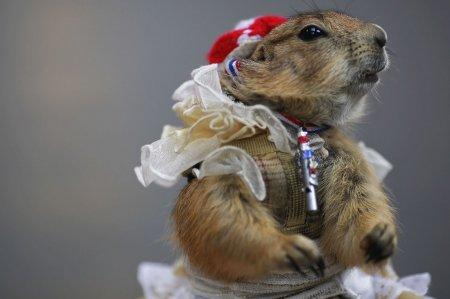 Новости из мира животных (15 фото)