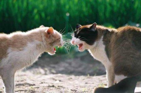 Бездомные коты и кошки (20 фото)