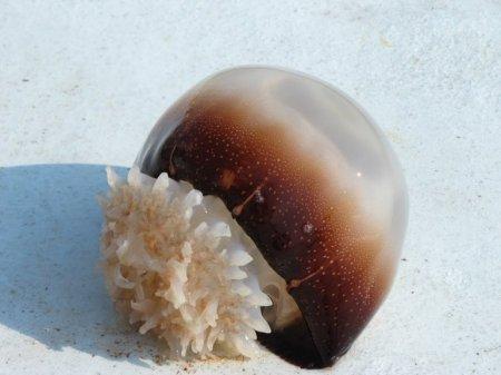 Грациозные и опасные: 10 Самых красивых медуз в мире
