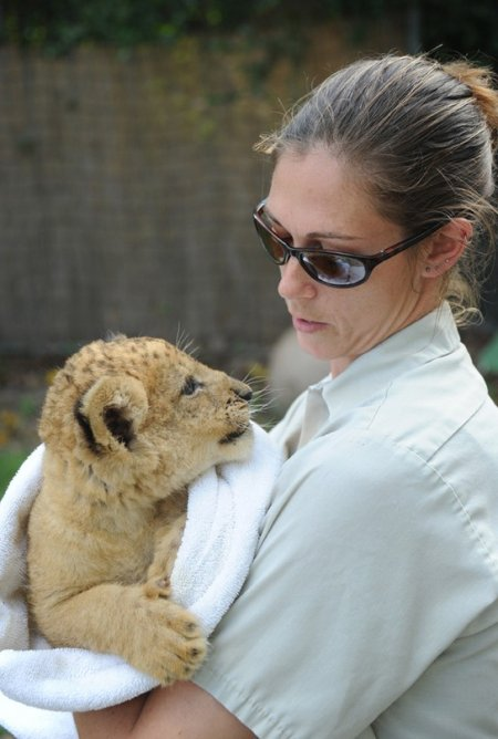 Львёнок Квази впервые появился на публике (15 фото)