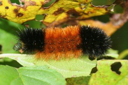 Топ-10: Жуткие насекомые со слишком большой продолжительностью жизни