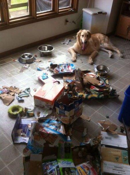 Одни дома: собаки (24 фото)