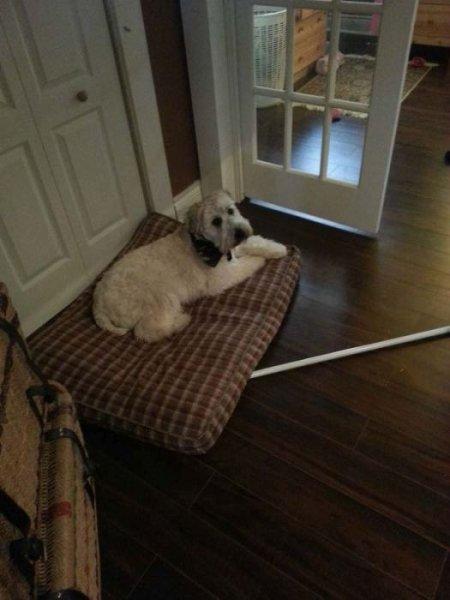 Будка в доме для любимой собаки (22 фото)