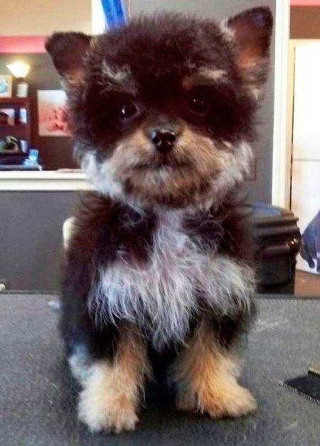 Необычные помеси собак (13 фото)