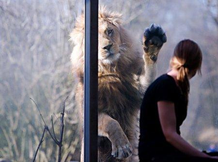 Мир животных в фотографиях (21 шт)