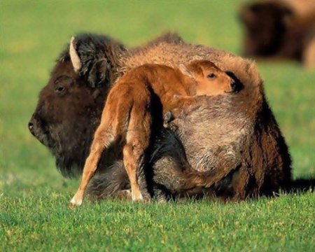 Спят усталые зверушки на сородичах-подушках… (25 фото)