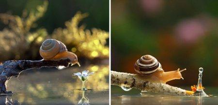 Волшебный миниатюрный мир улиток Вячеслава Мищенко (12 фото)