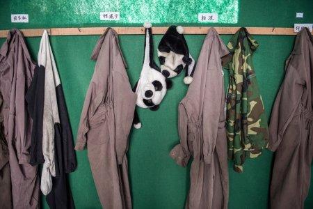 Центр разведения панд в китайской провинции Сычуань (13 фото)