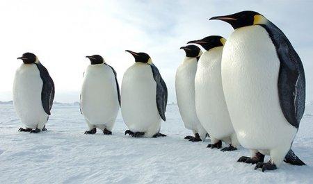 Топ-25: Почему царство животных более невероятно, чем вы думали
