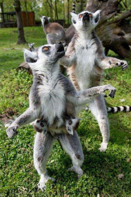 Жизнь животных в фотографиях (14 шт)