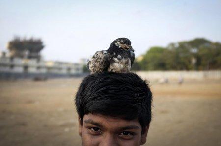 Жизнь животных в фотографиях (15 фото)