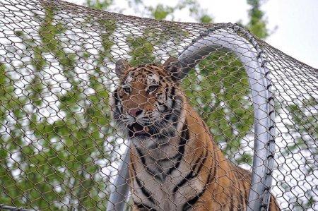 Жизнь животных в фотографиях (17 фото)