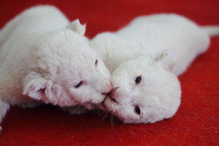 Мир животных в фотографиях (21 фото)