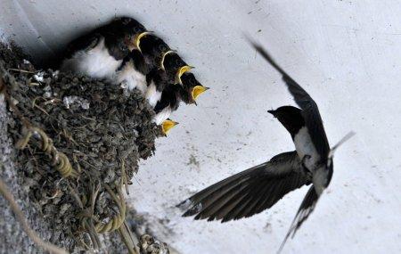 Весенние малыши (16 фото)