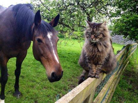 Безошибочный кот-пастух Мистер Би (9 фото)