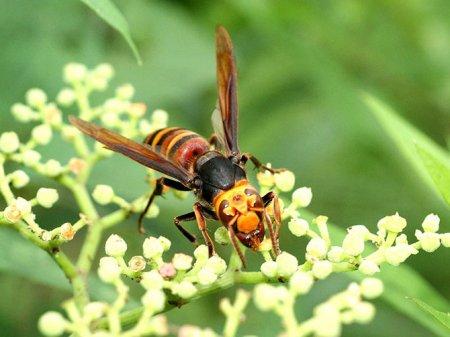 Крупные насекомые планеты (6 фото)