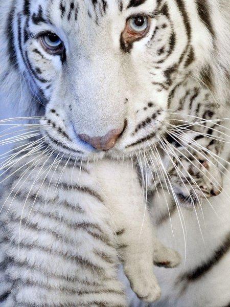 Мир животных в фотографиях (20 фото)