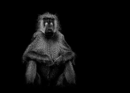 Дикие животные в фотопроекте Эда Хитерингтона (16 фото)
