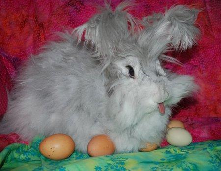 Очаровательные кролики с высунутыми язычками (20 фото)