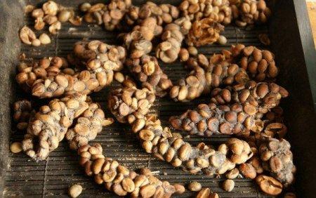Луваки и производство кофе