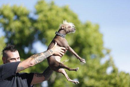 В Калифорнии прошёл конкурс среди самых уродливых собак (12 фото)