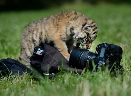 Мир животных в фотографиях (17 фото)