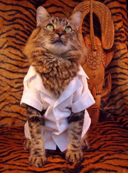Модные луки кота Лоренцо (12 фото)