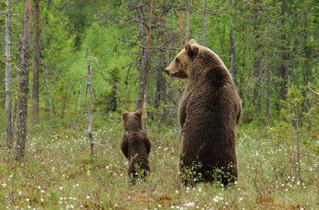 25 Самых очаровательных родительских моментов в царстве животных