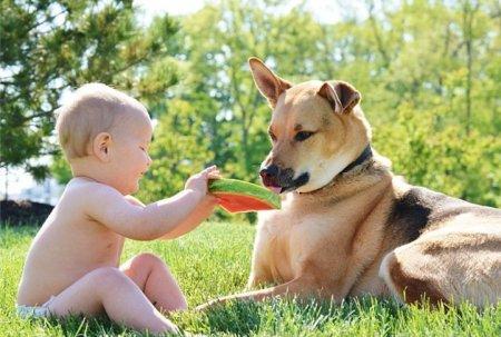 Трогательная дружба малыша Картера и пса по кличке Тоби (15 фото)