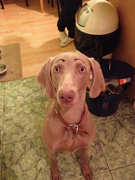 Новая фотозабава в Интернете: собаки с бровями (25 фото)