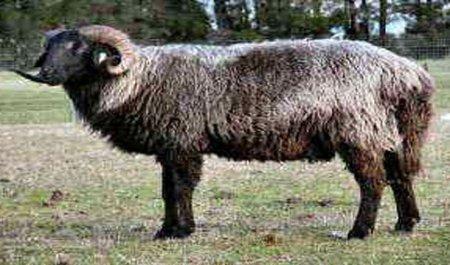 Топ-25 Животных с невероятными адаптациями для выживания
