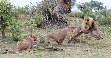 Невероятная история спасения детёныша бабуина (10 фото)