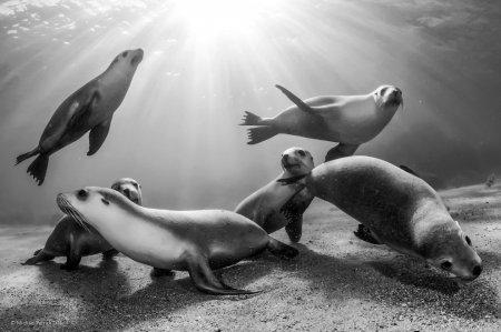 """Лучшие снимки в категории """"Приз зрительских симпатий"""" фотоконкурса """"Wildlife Photographer of the Year-2014"""" (19 фото)"""