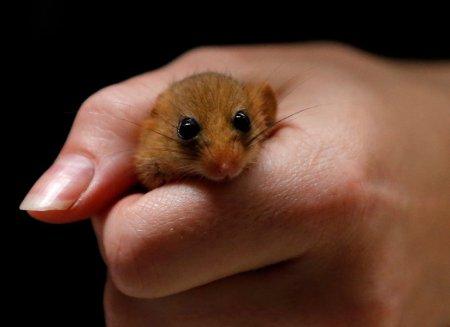 Животные в мире людей, люди в мире животных (31 фото)