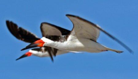 Топ-10 Птиц с самыми причудливыми клювами