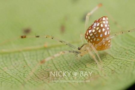 Зеркальные пауки Thwaitesia argentiopunctata (8 фото)