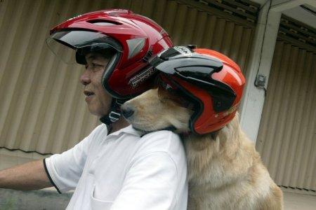 Развлечения для собачек (15 фото)