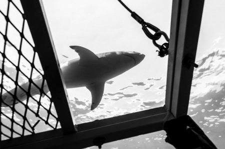 Акулы через объектив Тодда Бретла (11 фото)