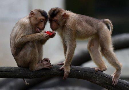 Мир животных в фотографиях (19 фото)