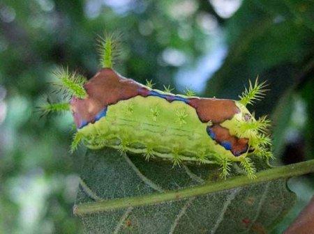Страшно неприятные насекомые (27 фото)