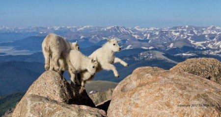 Ошеломляющие фотографии дикой природы (48 шт)