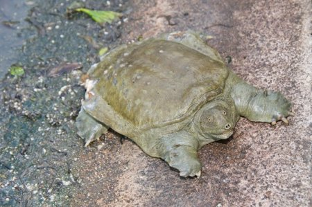 Топ-10 самых странных рептилий нашей планеты